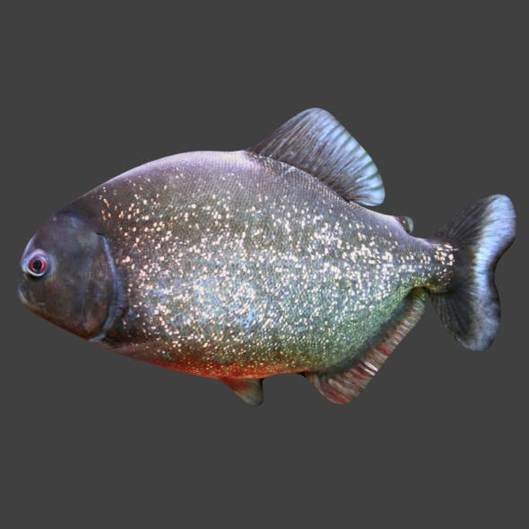Piranha by josepharaoh99   3DOcean